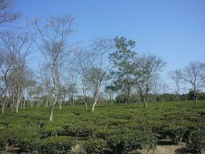 Image of Chabua, Assam